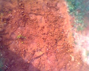 Be red earth of Auroville